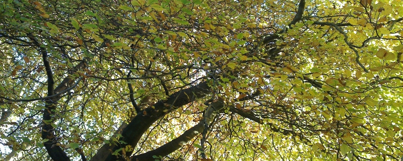 Autumn trees near Hardcastle Crags