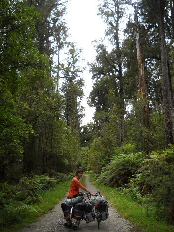 Into the woods to have lunch - typical forest scenery between Hokitika and Harihari