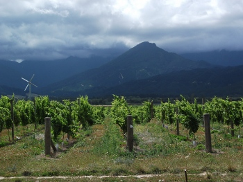 wairau valley vineyard